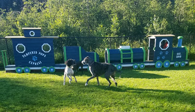 Dogs with play train. Contact us today